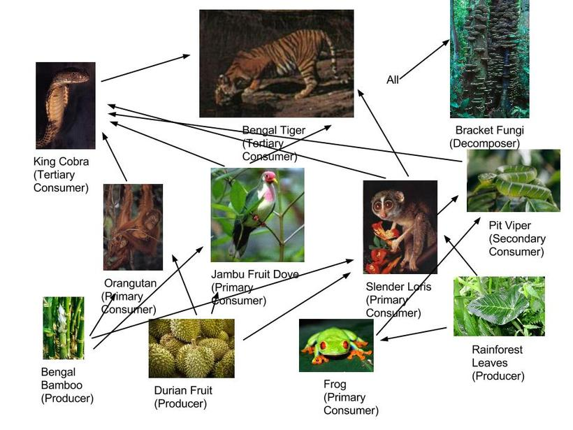 Types of Food Chains, Food webs, and Populations - Southeast Asian ...